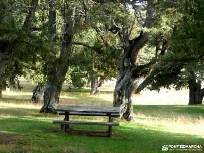 Enebral y Ermita Hornuez;Villa Maderuelo;madeira senderismo sierradegredos ruta por cuenca integral
